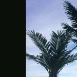 FAUX PALM TREES
